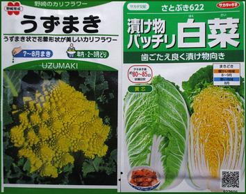 白菜カリフラワー2014.08.20.jpg
