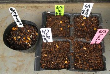葉物種蒔き2015.06.03