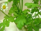 きれいな花02012.01.10