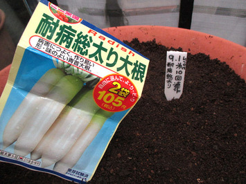 第10回連作ダイコン種蒔き2015.08.01