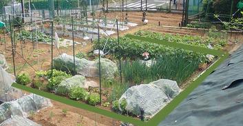 区民農園2020.05.05
