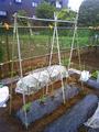 トマト支柱2011.05.23