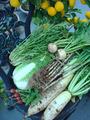 収穫2012.11.21
