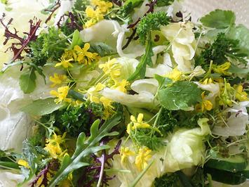 野菜サラダ2019.04.07