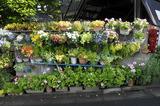 花が並ぶ.jpg