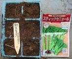 スティックブロッコリー種まき2010.07.29.jpg