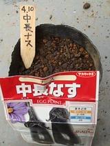 中長ナス種まき2010.04.10.jpg