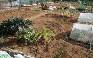 区民農園2021.0118