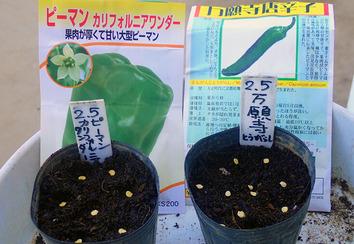 種蒔き 2020.02.05