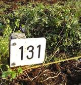 131番ボード