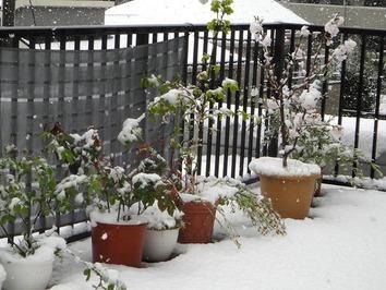 降雪2020.03.29