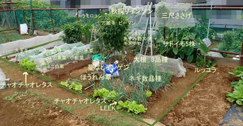 区民農園2019.09.22