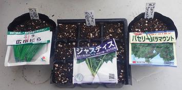 種蒔き 23020.05.01