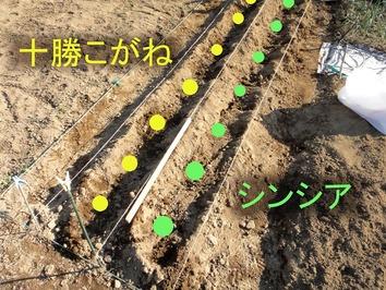 ジャガイモ植え込み2020.03.18