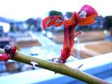 ツルバラ2010.02.26.jpg