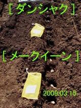 ジャガイモ植付2009.03.15.jpg