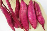 サツマイモ収穫2013.11.28