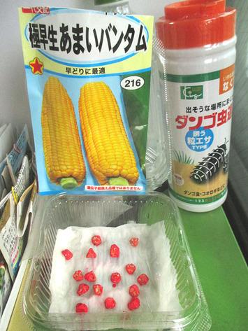 第5弾トウモロコシ種蒔き2016.07.15