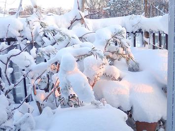 大雪2018.01.23