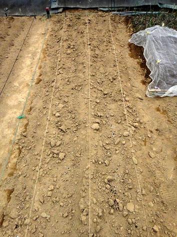 ジャガイモ 畝2020.03.27