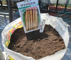 ゴボウ種蒔き2014.03.24.jpg