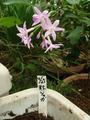 秋ジャガイモ2012.09.25