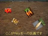 マイ区画区民農園2013.02.21