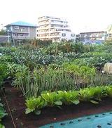 畑とマンション