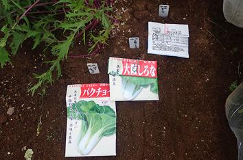 種蒔き2019.10.14