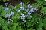 春の花10