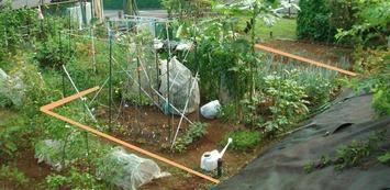 区民農園2020.08.28