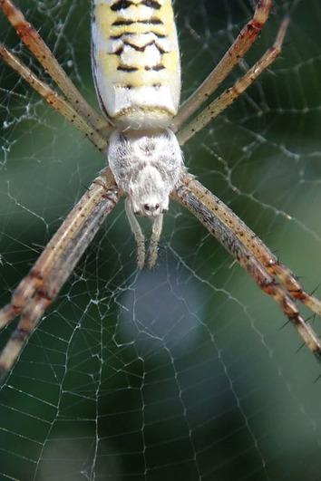 蜘蛛2018.08.13