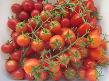 房どりトマト2015.07.28