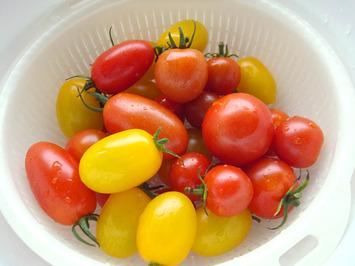 トマト収穫2020.07.21