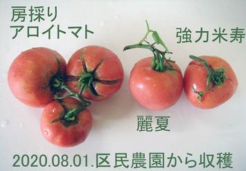 トマト収穫2020.08.01.