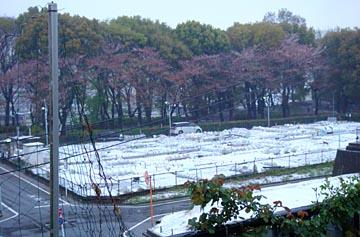 雪区民農園2010.04.17.jpg