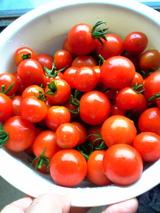 トマト06.07.25.