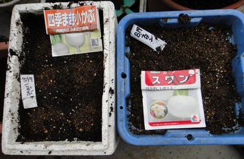 カブ種蒔き2017.08.19