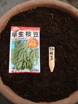 早生枝豆種まき2010.03.26.jpg