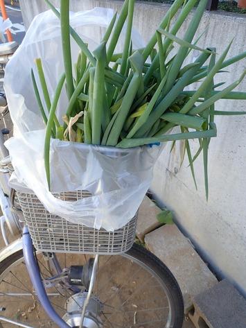 収穫野菜2021.01.13