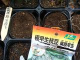 エダマメ種まき2010.07.29.jpg