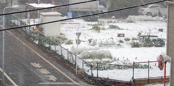 雪の区民農園2018.01.22