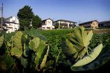 夏の畑2010.07.27.jpg