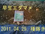 早生エダマメ種蒔き2011.04.29