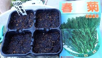 春菊種蒔き2020.10.20
