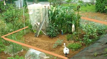 区民農園 2020.09.01