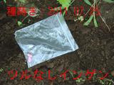 2ツル無しインゲン2011.07.24.