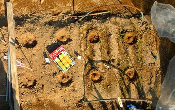 トウモロコシ種蒔き2020.04.06