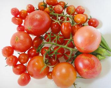 トマト収穫2017.07.17