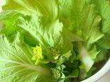 山東菜収穫2012.04.02.